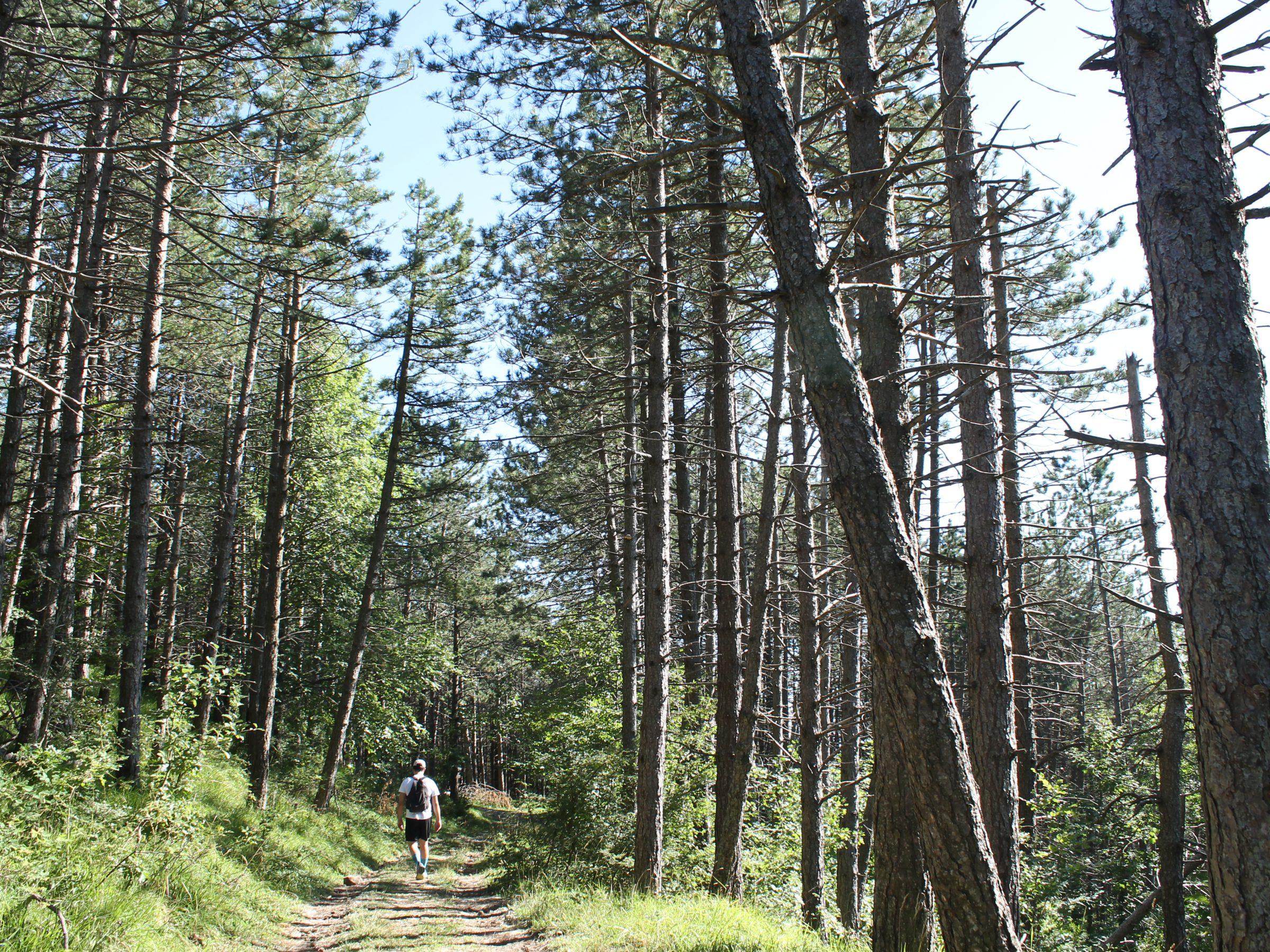 Trekking al Monte Fumaiolo
