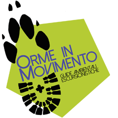 Orme in movimento