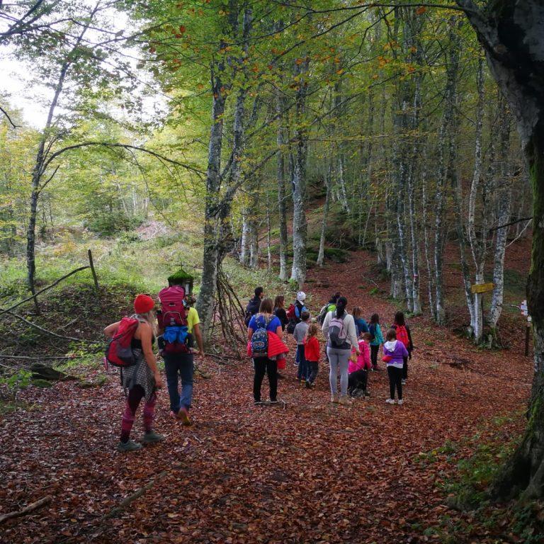 Le foreste di Sant'Alberico